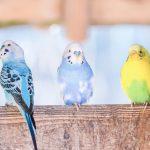 鳥を飼うならコレ!和風なペットの名前おすすめランキング!