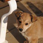 犬の和風な名前おすすめランキング!ペットにつけるならどれ?