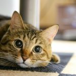 猫におすすめの和風な名前ランキング!かわいいやかっこいいペットに!