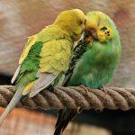 ペットのインコやオウムのかっこいい名前ランキング!鳥におすすめ!