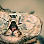 一人暮らしの女性に人気No.1のペット!飼いやすい猫おすすめランキング!